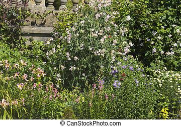 herbáceo, flor, Cama,