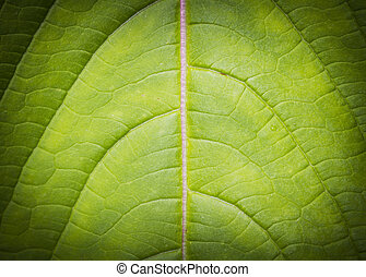 Leaf background low key - Leaf background and texture low...