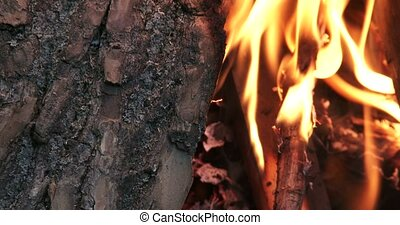 Wood burning in fire pit on a camp - Big pieces of wood...