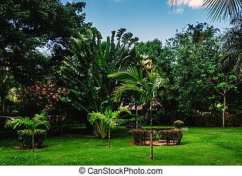 Jungle tropical park. Ancient village Altos de Chavon -...