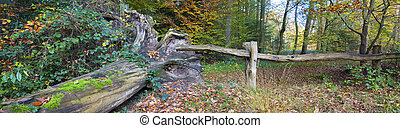 old wooden gate - fallen tree and old wooden gate in a...