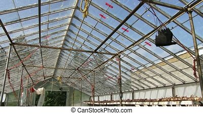 Onions drying in a greenhouse - Organic onions drying and...