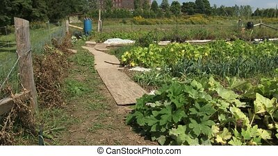 Small urban garden - Small organic urban garden with many...