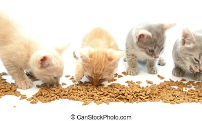 Cat eating dry cat food - cute little kittens eating dry...
