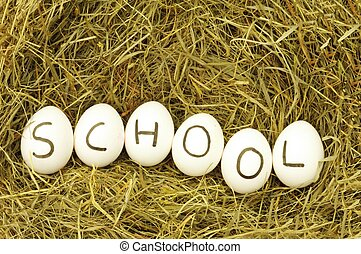 school or edication concept with eggs on grass hey or straw