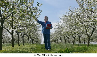 Agronomist or farmer in orchard - Agronomist or farmer...
