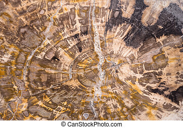 petrified wood background - petrified wood section abstract...