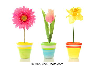 funny flowers - funny summer flowers isolated on white...
