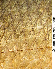 gold scales - organic abstraction of beautiful bright golden...