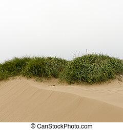 sand dune landscape on the coast Europe