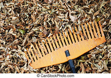 rake and dry leaves