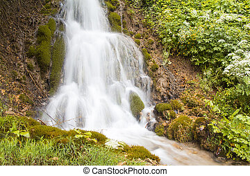 Small waterfall and stream in green forest