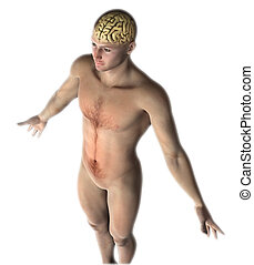 3D male figure with brain exposed