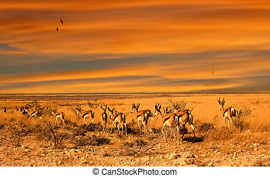 Impala sunset - herd of impala antelopes at the sunset in...