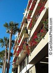 Blooming bougainvilleas - Looking up at tall palm trees and...