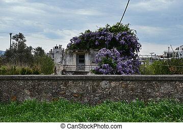 purple flowers abandoned house