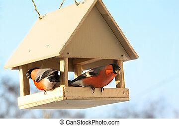 två, bullfinches, fodra
