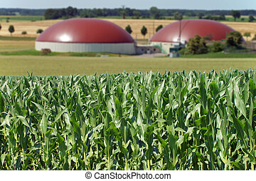 Biogas facility and corn field