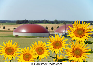 Biogas facility and sunflowers