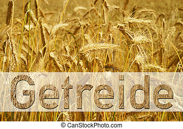 Grain field and the german word grain