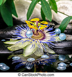 spa setting of passiflora flower, branches, towels, zen...