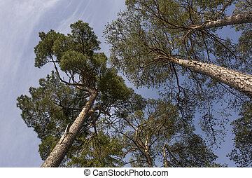 Vibrant tree canopy - Shot of a vibrant tree canopy in a...