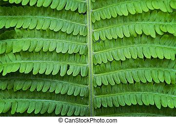 Fern leaf - Background with fresh new green fern leaf