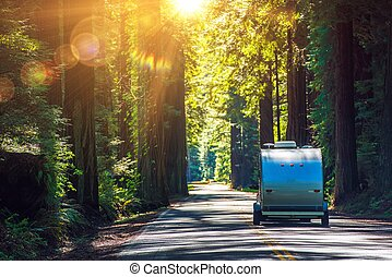 Camping in Redwoods. Travel Trailer RV on the Redwood...