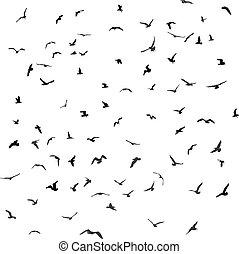 Birds, gulls, black silhouette on white background. Vector -...