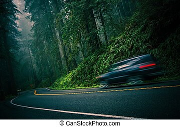 Redwood Highway - California 101 Foggy Redwood Highway and...