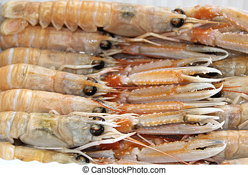fresh scampi of the mediterranean sea - scampi of the...