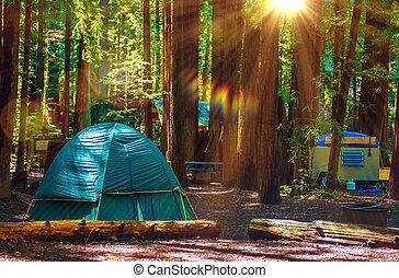 tienda, campamento, en, secoyas,