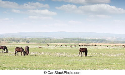 farm animals on pasture country landscape