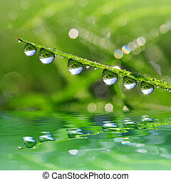 dew drop - Fresh green grass with dew drop closeup Nature...