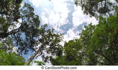 Sky through jungle trees, steadicam shot