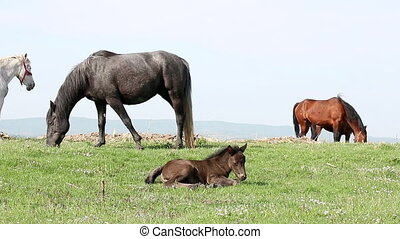 foal and horses on pasture