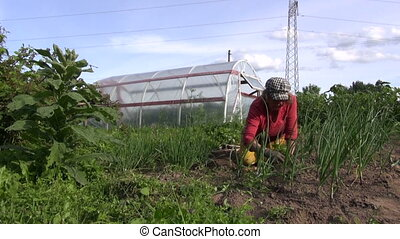 woman weed onion bed - elderly woman kneel grub weed onion...