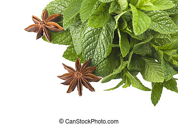 cinnamon,star anise,mint,licorice,close up on the white