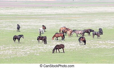 herd of horses on pasture country landscape