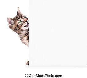 Cute kitten - Cute little kitten with blank billboard on...