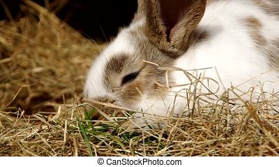 Rabbits in the cage - White rabbit in the cage on dry grass...