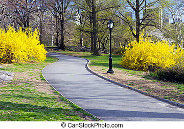 Path Through Central Park in New York - Trail through...