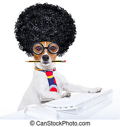 secretary dog - jack russell secretary dog booking a...
