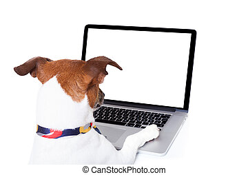 dog computer pc - jack russell dog booking , searching or...