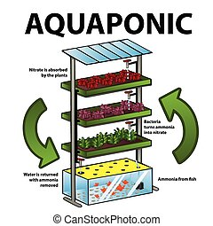 Aquaponic system - A vector illustration of aquaponic system