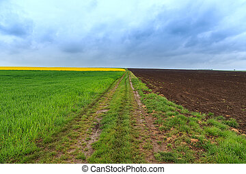 Dirt road and canola fields in Hungary