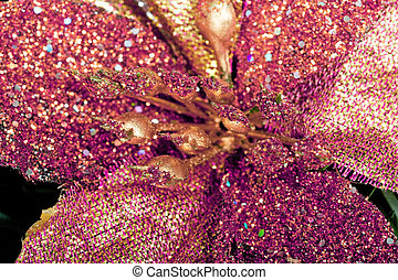 christmas flower - beautiful shiny purple  christmas flower