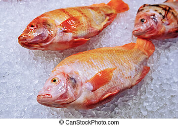 pez, marina, hielo