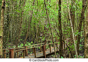 Landscape of Wood corridor at mangrove forest