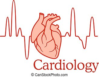 Cardiology concept with an ECG and heart